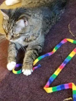 Stitch with Rainbow Shoelace